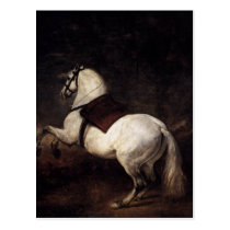 A White Horse by Diego Velazquez Postcard