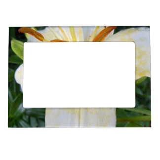 A White Lily Magnetic Picture Frame
