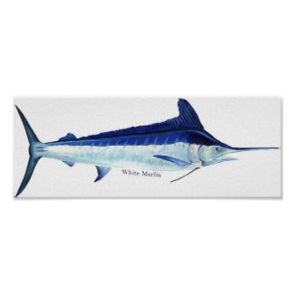 A white marlin poster