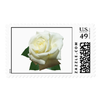 A White Rose Postage