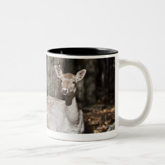 A White-tailed deer (fawn) standing in the Two-Tone Coffee Mug
