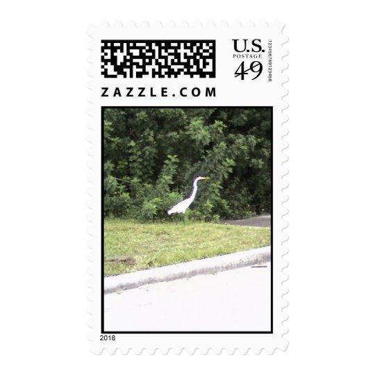 A wild bird in Florida Postage
