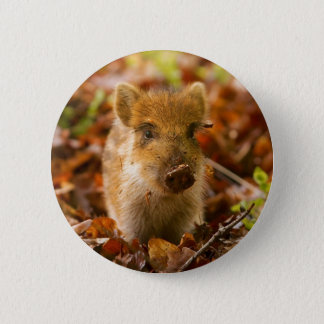 A Wild Boar Piglet Sus Scrofa in the Autumn Leaves Button
