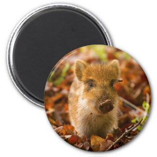 A Wild Boar Piglet Sus Scrofa in the Autumn Leaves Magnet