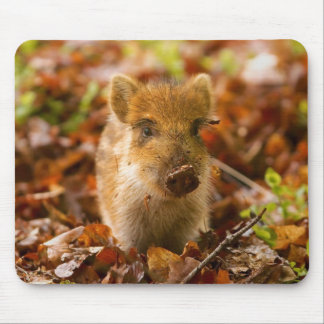 A Wild Boar Piglet Sus Scrofa in the Autumn Leaves Mouse Pad
