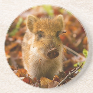 A Wild Boar Piglet Sus Scrofa in the Autumn Leaves Sandstone Coaster