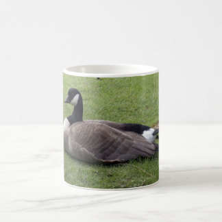 A wild duck on green grass in spring time mugs