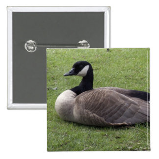 A wild duck on green grass in spring time pinback button