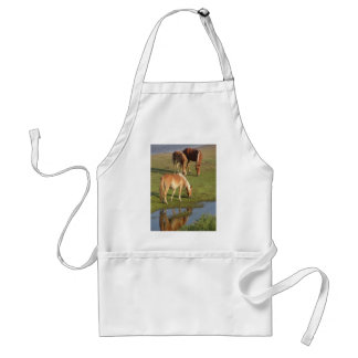 A Wild Mustang Family Grazing in reflection! Adult Apron