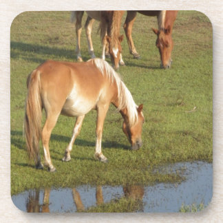 A Wild Mustang Family Grazing in reflection! Drink Coaster