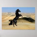 A wild rearing black stallion poster