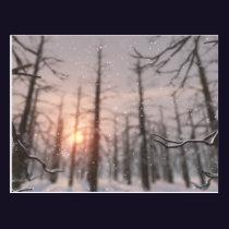 A Winter Night's Dream Postcard