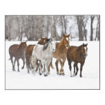 A winter scenic of running horses 2 wood print