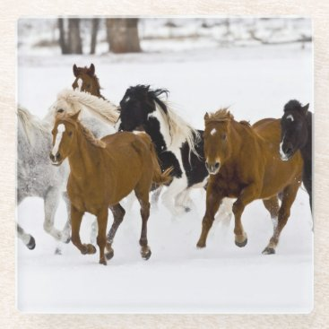 USA Themed A winter scenic of running horses glass coaster
