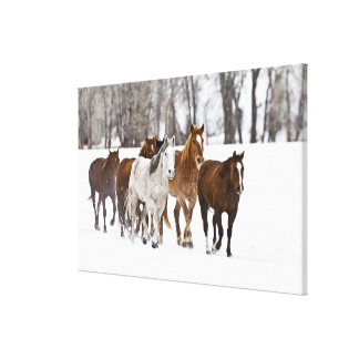 A winter scenic of running horses on The 2 Canvas Print