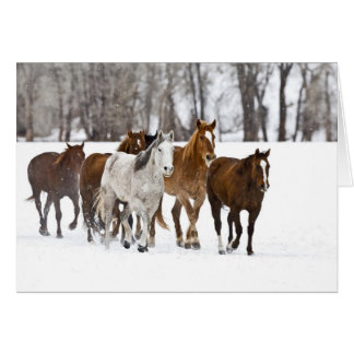 A winter scenic of running horses on The 2 Card