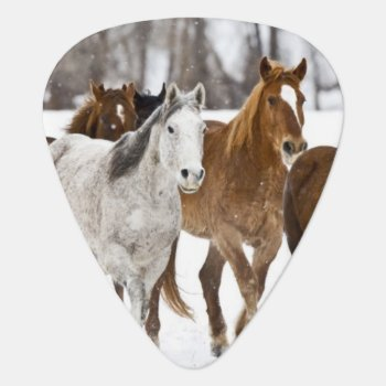 A Winter Scenic Of Running Horses On The 2 Guitar Pick by DanitaDelimont at Zazzle
