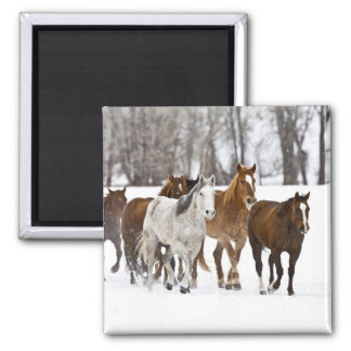A winter scenic of running horses on The 2 Magnet