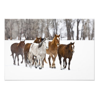 A winter scenic of running horses on The 2 Photo