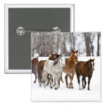A winter scenic of running horses on The 2 Pinback Button