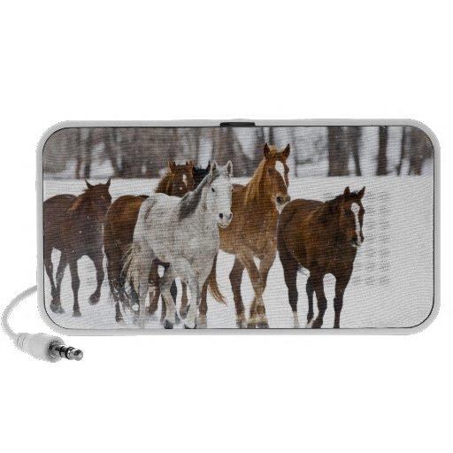 A winter scenic of running horses on The 2 Speaker