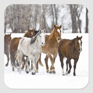 A winter scenic of running horses on The 2 Square Sticker