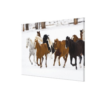 A winter scenic of running horses on The Canvas Print