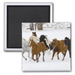 A winter scenic of running horses on The 2 Inch Square Magnet
