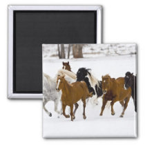 A winter scenic of running horses on The Magnet
