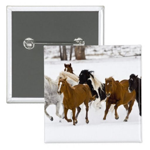 A winter scenic of running horses on The Pinback Button