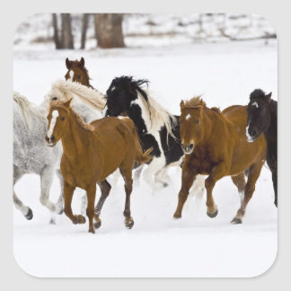 A winter scenic of running horses on The Square Sticker