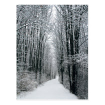 A Winters Path Postcard