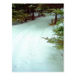 A Winter's Walk Postcard