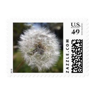 A Wish In The Making Postage Stamps