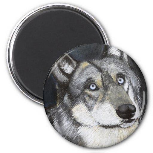 A Wolfs la mirada fija, pintando por Ben Jones Imanes Para Frigoríficos