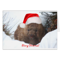 A wombat merry Christmas from Down Under Card