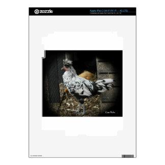 a wonderful design of a beautiful exotic bird iPad 3 decals