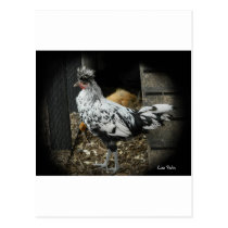 a wonderful design of a beautiful exotic bird postcard