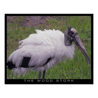 A Wood Stork Poster