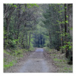 A Wooded Path Print