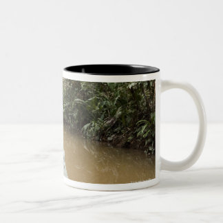 A wooden canoe made of Eucylptus tree floats in 2 Two-Tone Coffee Mug