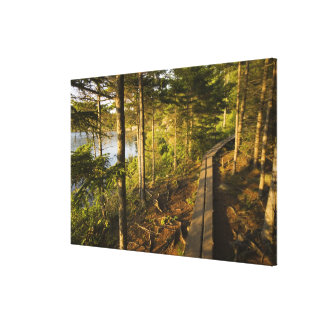 A wooden walkway in Acadia National Park Maine Canvas Print