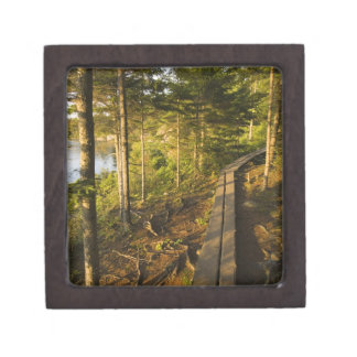A wooden walkway in Acadia National Park Maine Jewelry Box