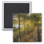 A wooden walkway in Acadia National Park Maine Refrigerator Magnets
