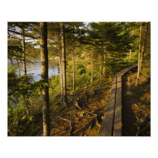 A wooden walkway in Acadia National Park Maine Poster