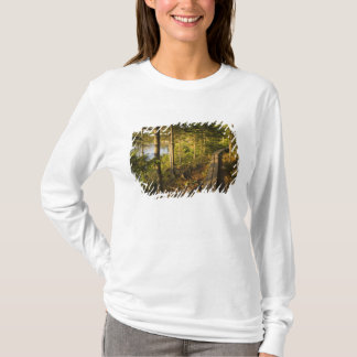 A wooden walkway in Acadia National Park Maine T-Shirt