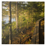 A wooden walkway in Acadia National Park Maine Tile