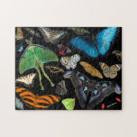 A World of Butterflies and Moths. Puzzles