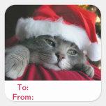 A y desde el regalo marca al pegatina del gato con
