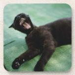 A yawning cat. coasters